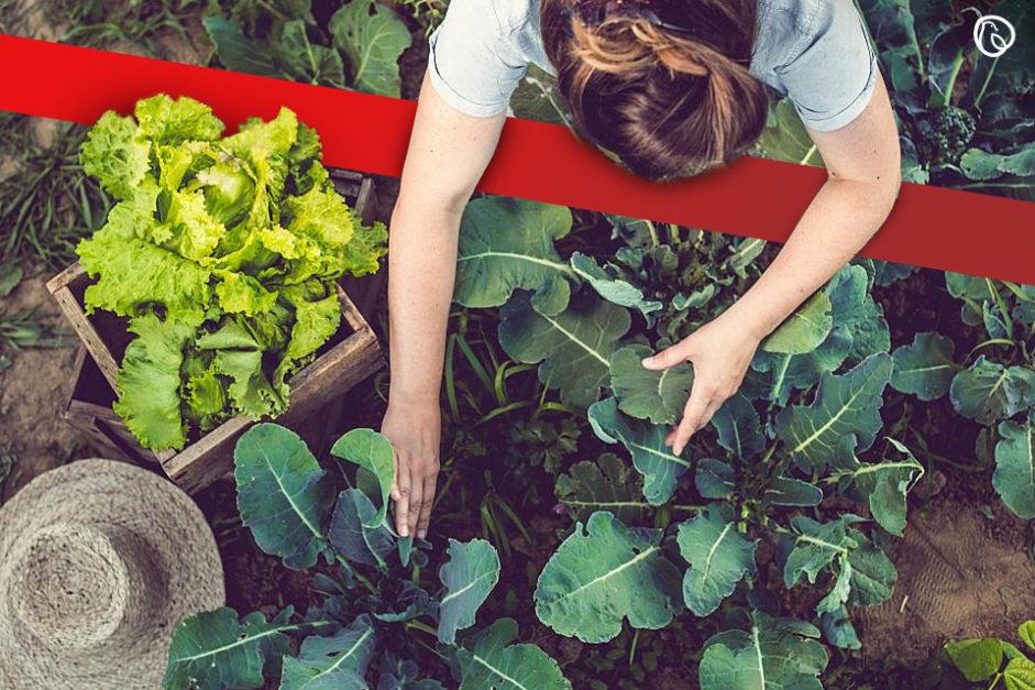 Home farming