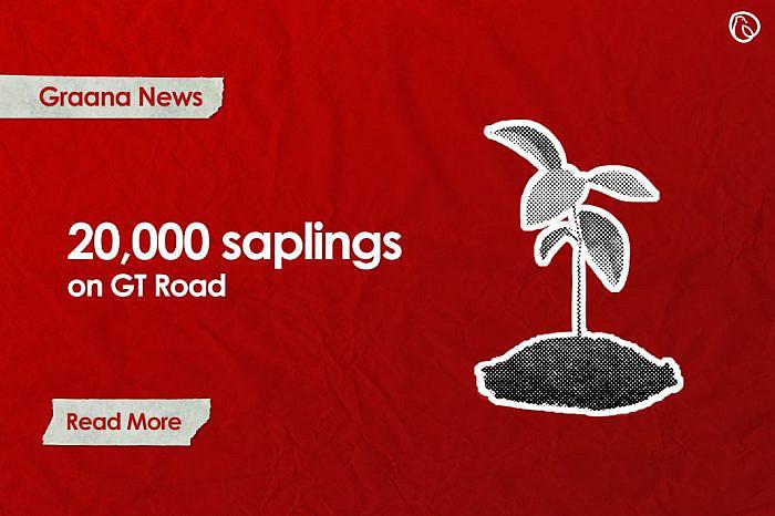 NHA to plant 20,000 saplings on GT Road