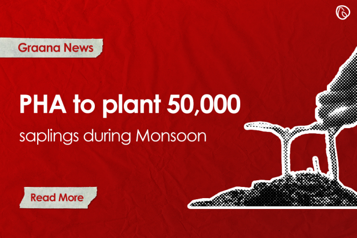 PHA to plant 50,000 saplings during monsoon