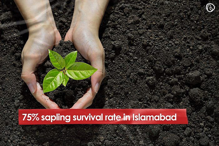 75% sapling survival rate in Islamabad