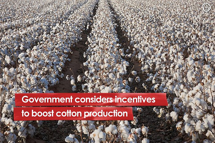 Government considers incentives to boost cotton production