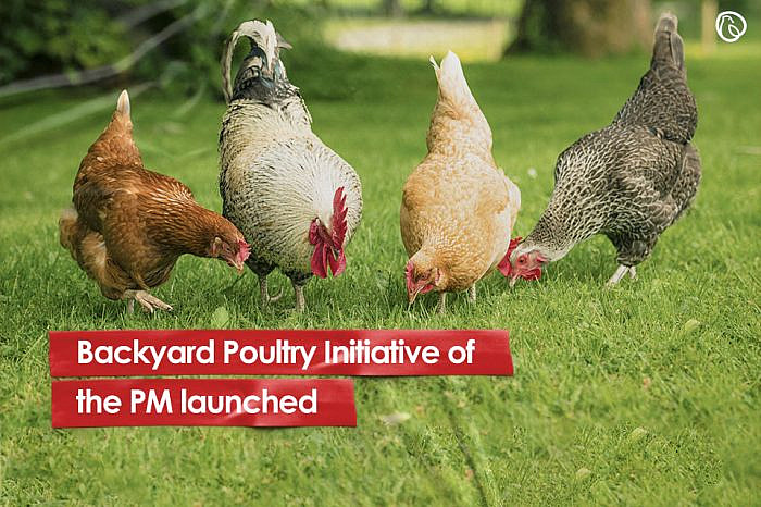 Backyard Poultry Initiative of the PM launched