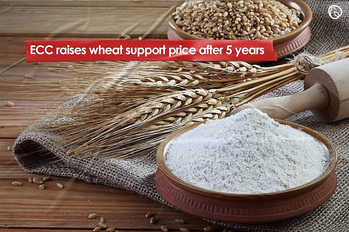 ECC raises wheat support price after 5 years