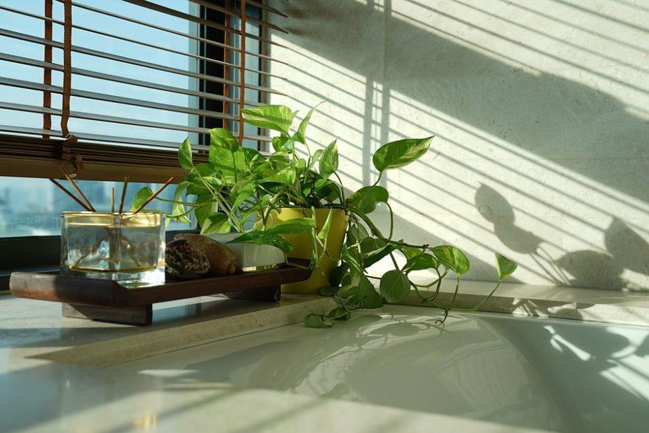 best indoor plant
