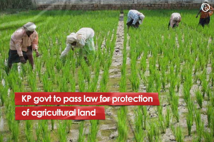 KP govt to pass law for protection of agricultural land