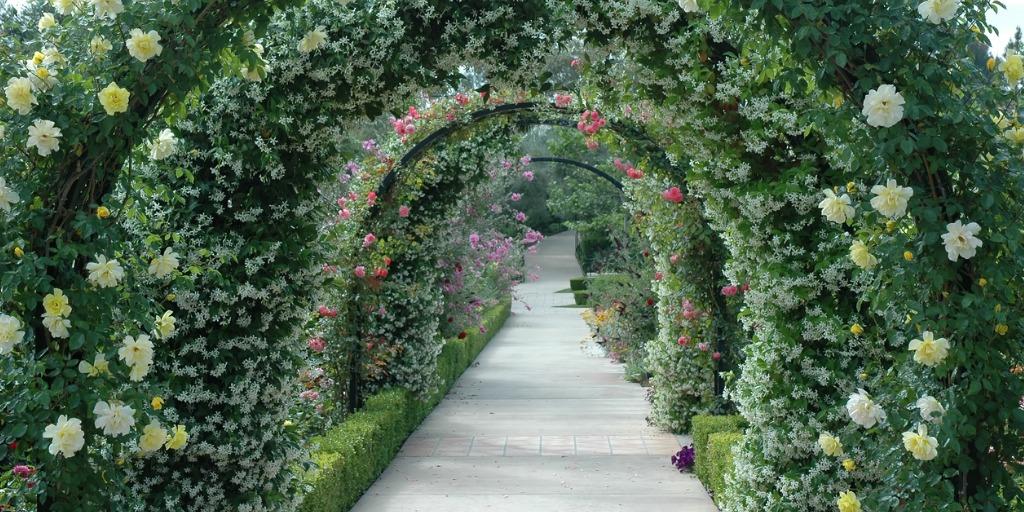 rose and jasmine garden