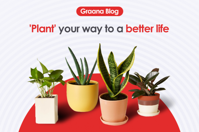 'Plant' your way to a better life