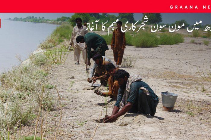 سندھ میں مون سون شجرکاری مہم کا آغاز