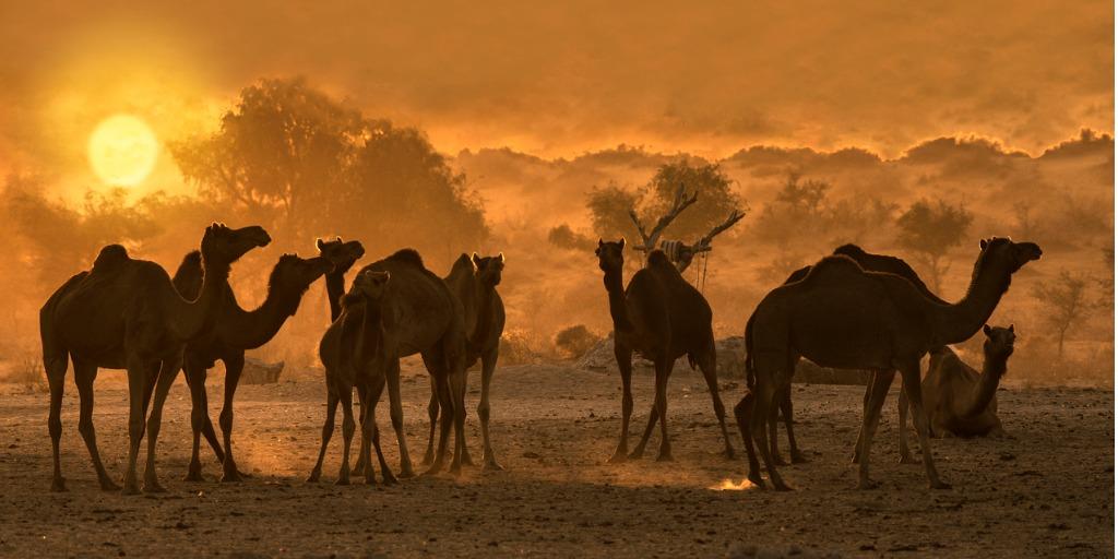 cholistan desert in pakistan