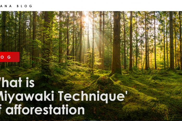 What is 'Miyawaki Technique' of afforestation?