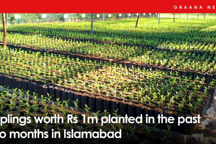 Saplings worth Rs 1m planted in the past two months in Islamabad