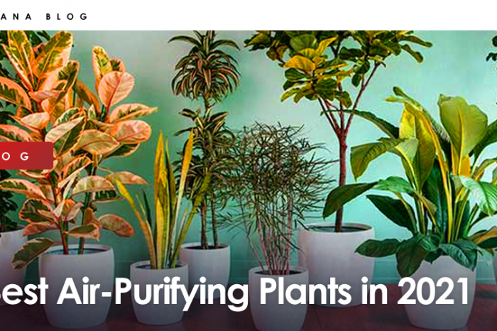 Best Air-Purifying Plants in 2021