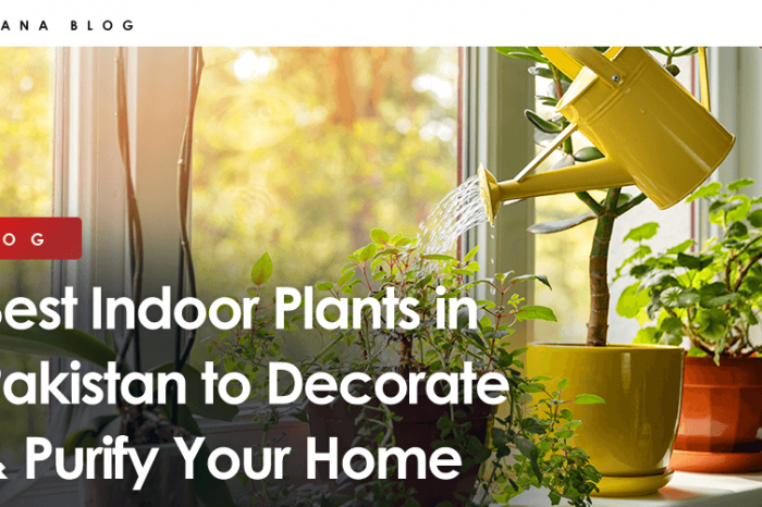 Best Indoor Plants in Pakistan to Decorate & Purify Your Home