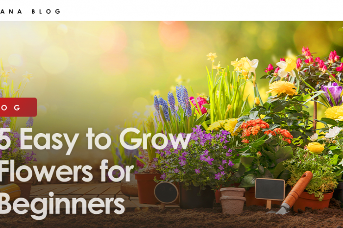 5 Easy to Grow Flowers for Beginners