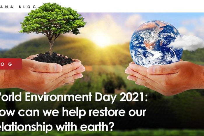 World Environment Day 2021: How can we help restore our relationship with earth?