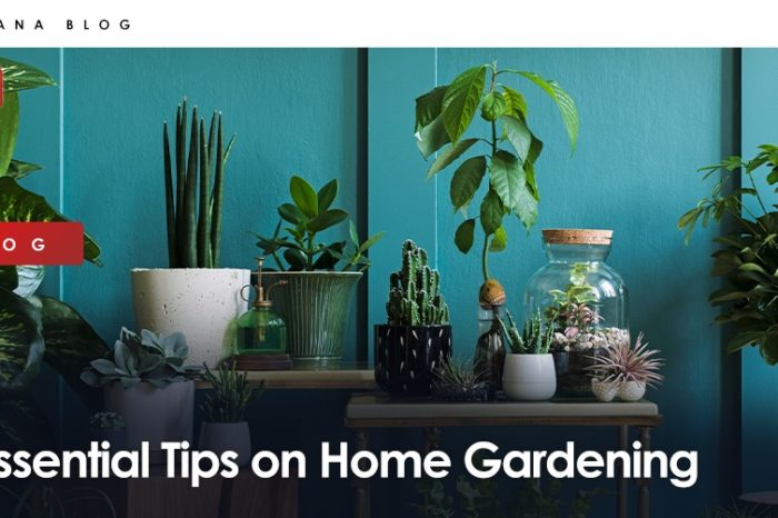 Essential Tips on Home Gardening