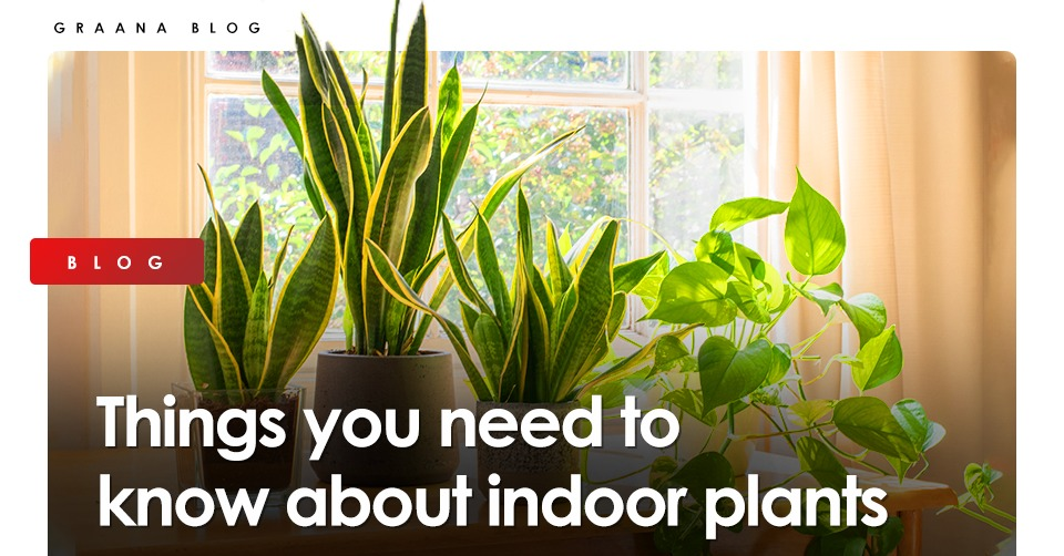 Things you need to know about indoor plants