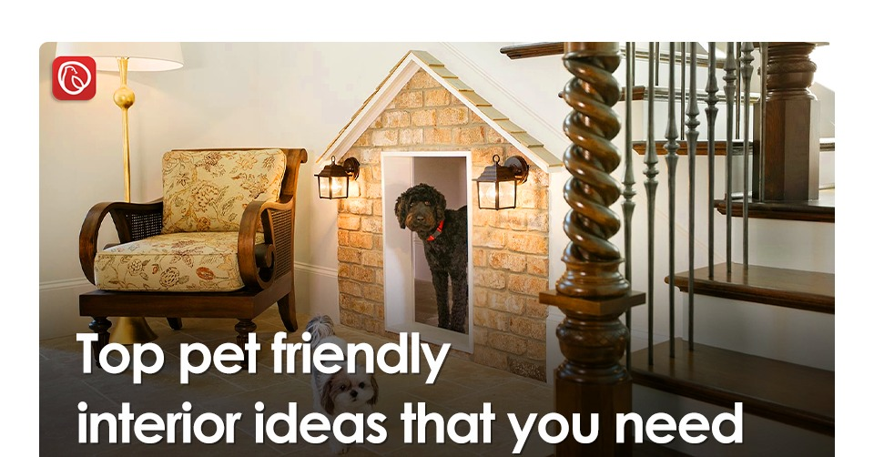 Top pet friendly interior ideas that you need