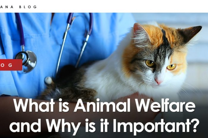 What is Animal Welfare and Why is it Important?